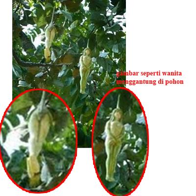 gambar wanita tanpa busana ditemukan menggantung dipohon - RIE ...
