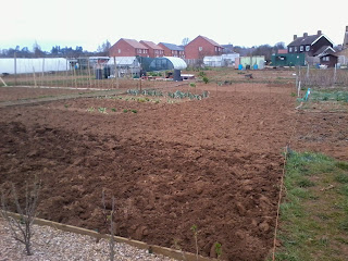 freshly dug allotment
