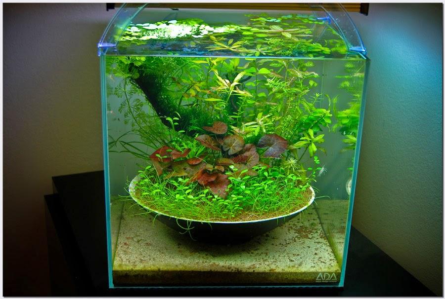 Membuat Filter Aquae Aquarium