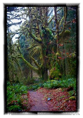 hoh rain forest trail