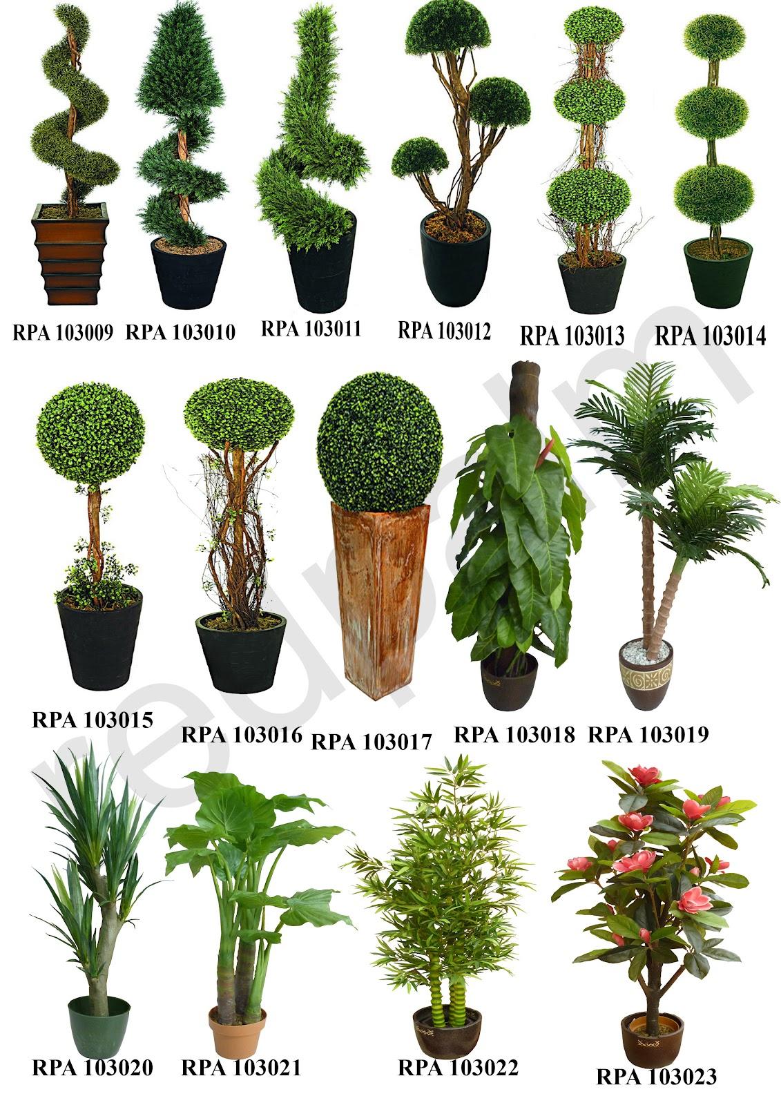 katalog tanaman dan pohon red palm terbaru