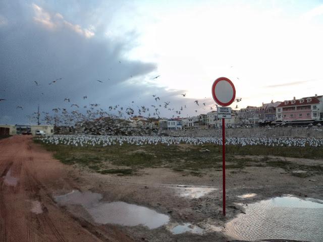 seagul plague
