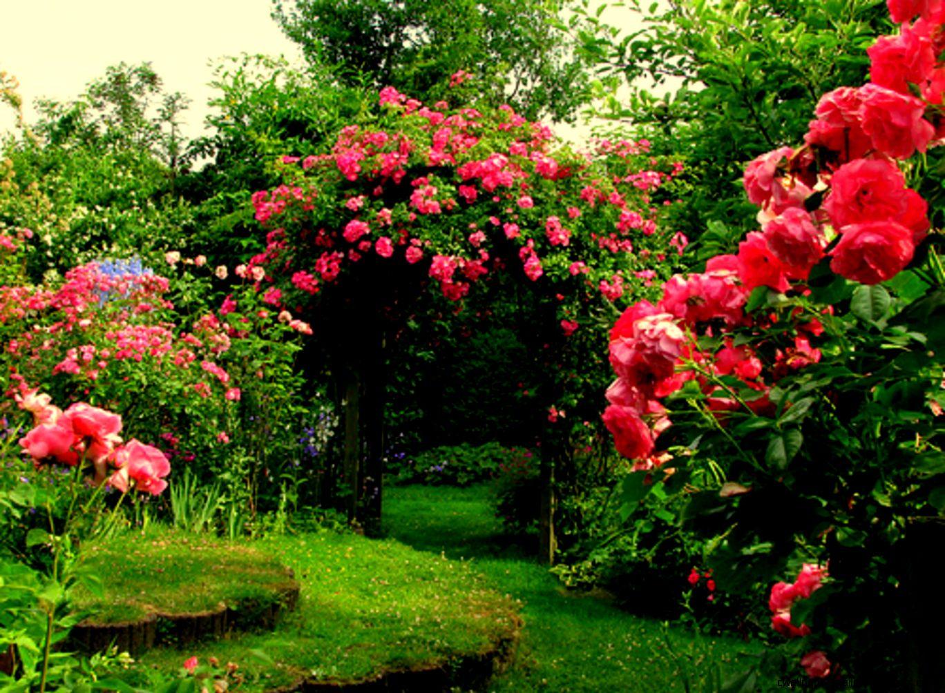 English Rose Garden Wallpaper  Home Decor Catalogs