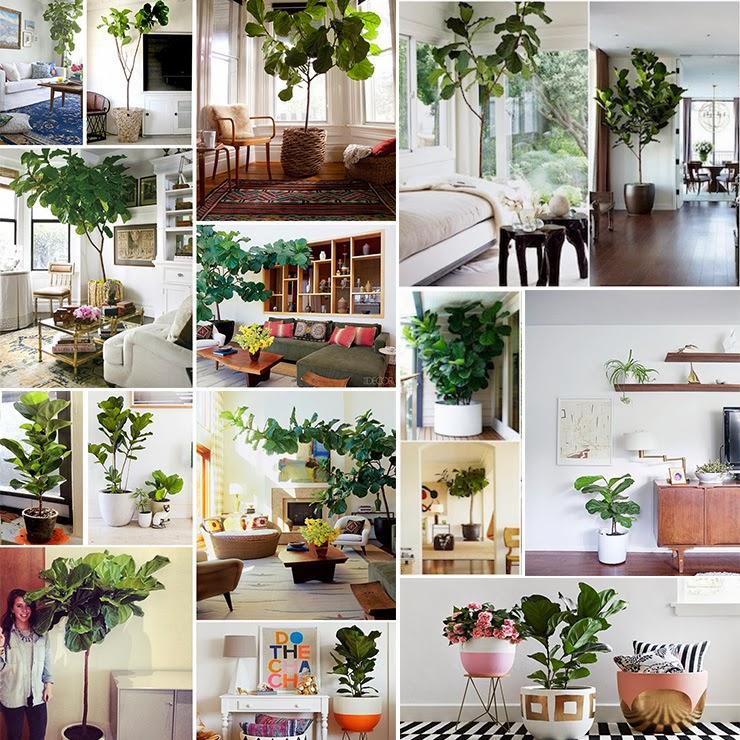 Missjardin las mejores plantas para la oficina for Plantas para oficina