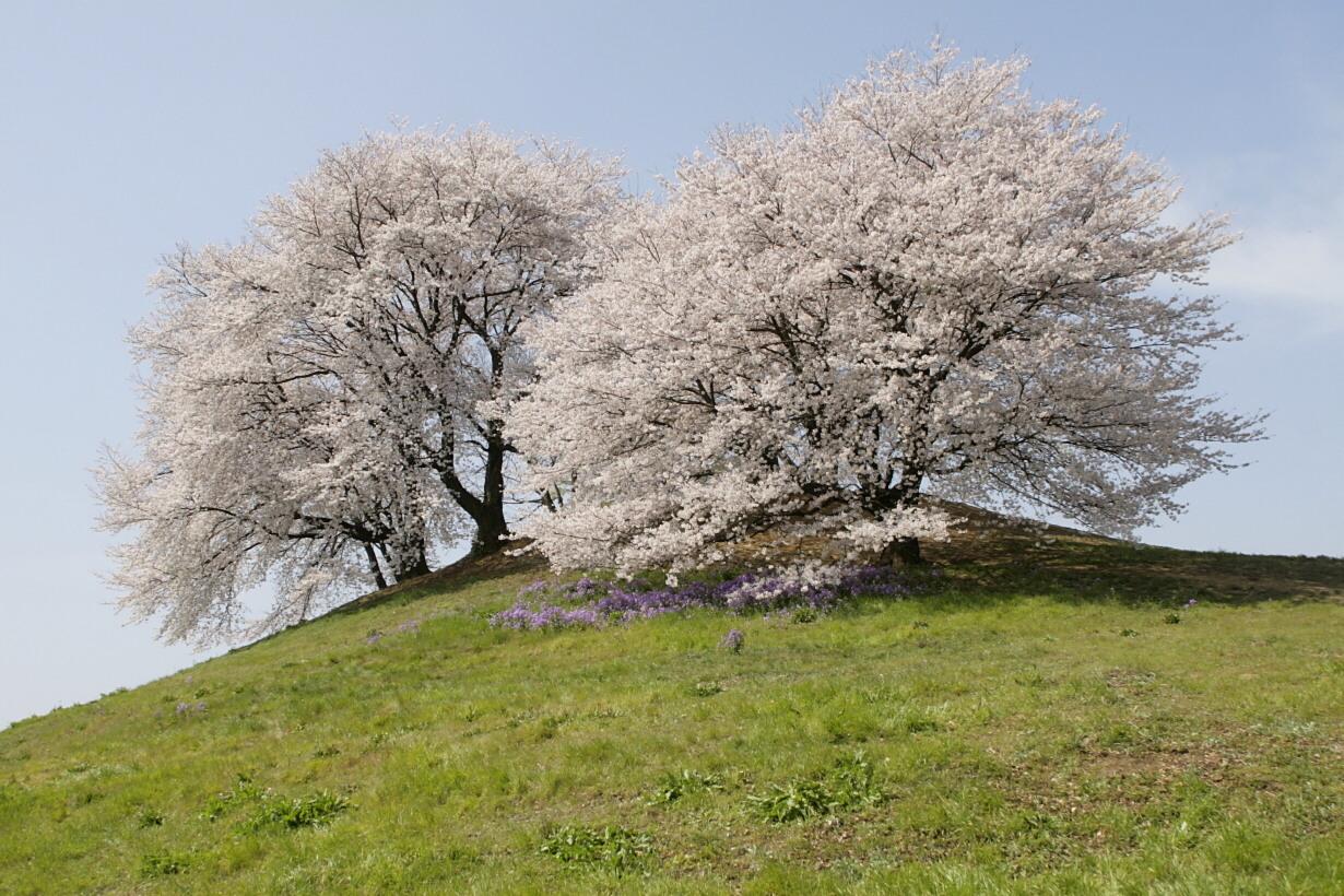 春の白石稲荷山古墳