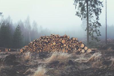 Románia, erdőirtás, erdőőrség, romén erdőőrség, illegális fakitermelés,