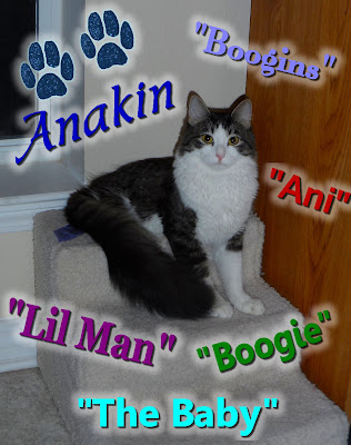 Anakin Two Legged Cat's Nicknames, The Baby, Lil Man, Ani, Boogie, Boogins