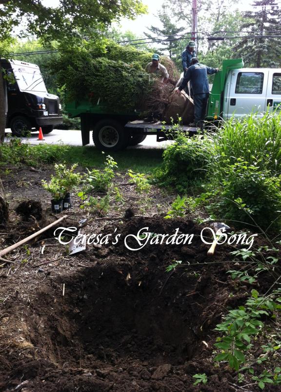 Teresa 39 s garden song selecting and hiring a landscape for Don gardner arborist