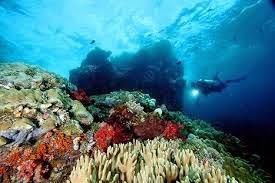 Laut Raja Ampat