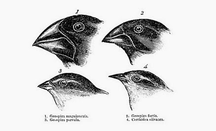 The Myths Behind 'Darwin's Finches'