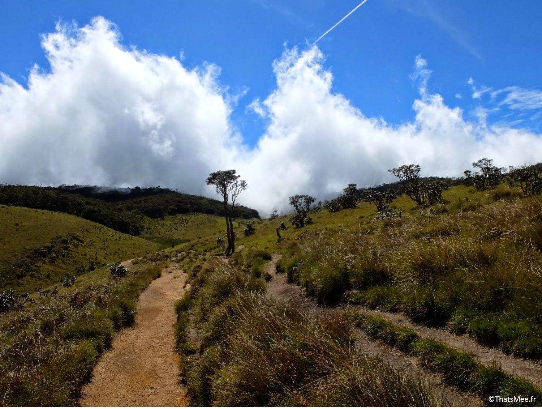 Horton Plains Sri Lanka brume 3000 hectares biodiversité