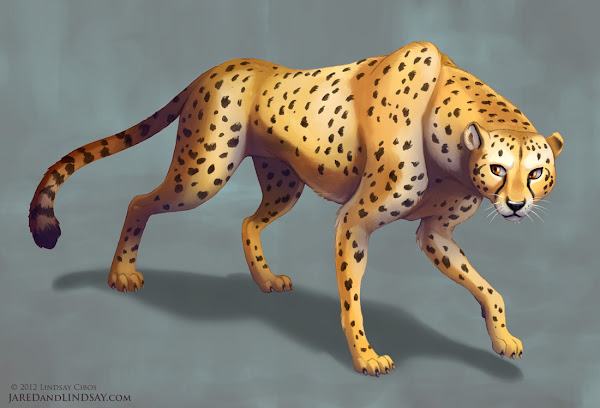 Cheetah Drawings