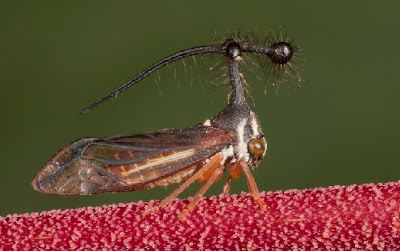 insecto raro