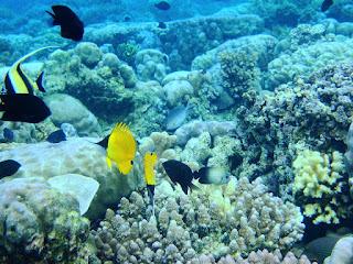 Bunaken Marine Park
