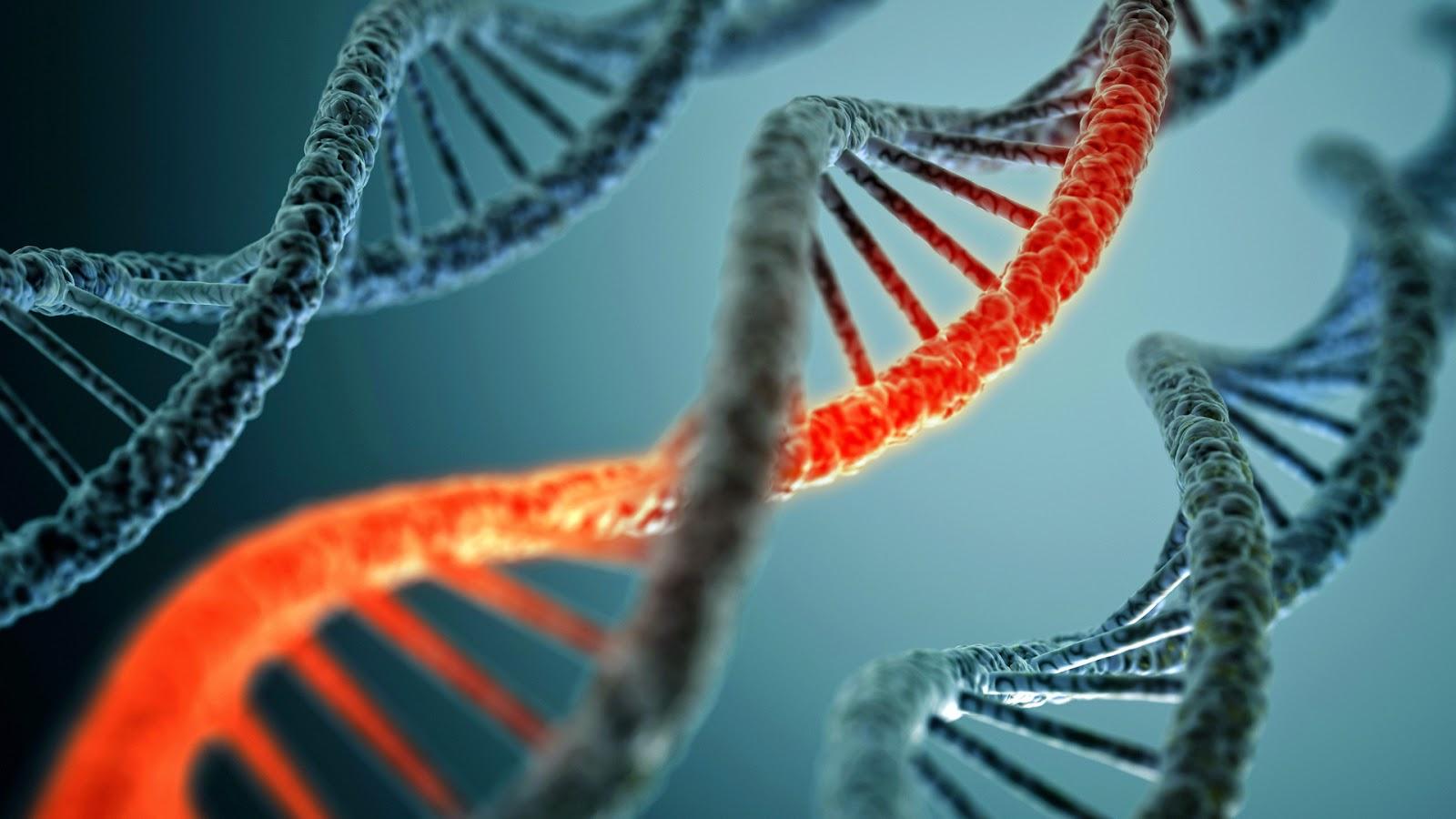 Hewan - Hewan Mengerikan Karena Kesalahan Rekayasa Genetika