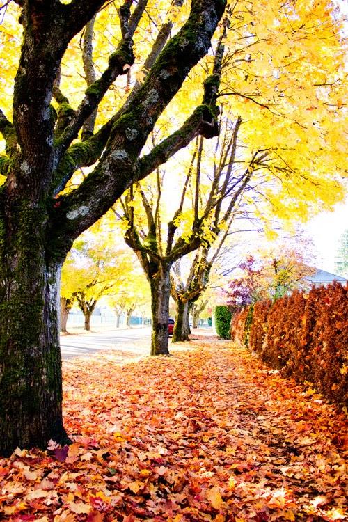 Vancouver autumn streets jasmine zhu photography