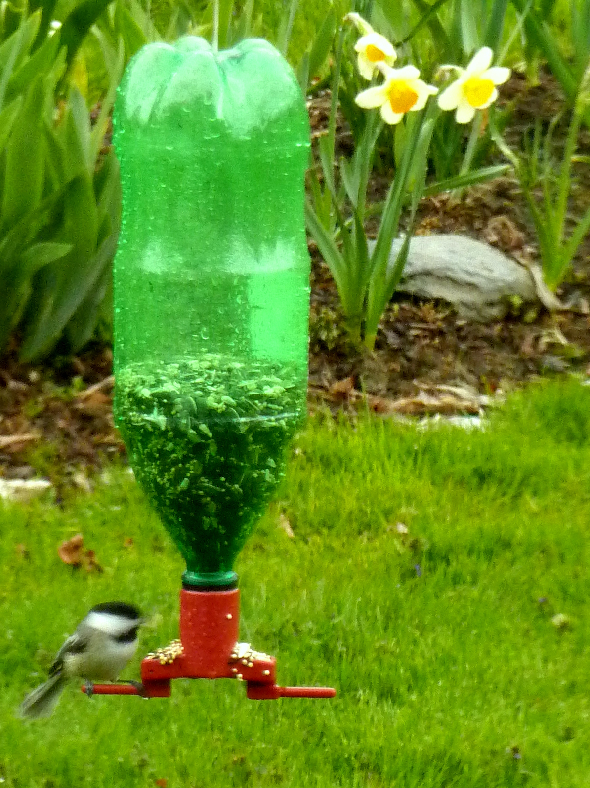 My kids said i 39 d never do this april 2012 for Plastic bird feeders