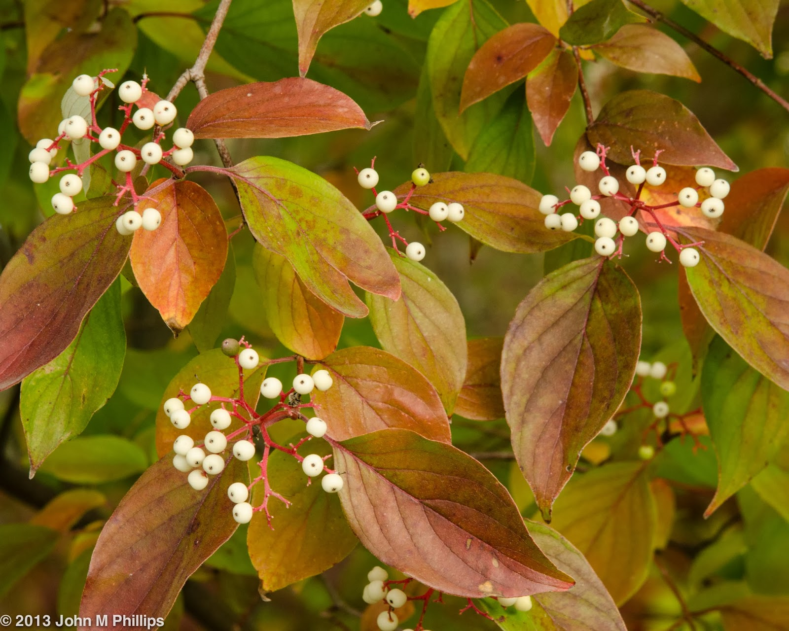 OK, so even though I was focusing on fall color, the following is a ...