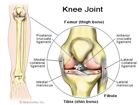 Ahli Pengobatan Cedera Tulang Rawan