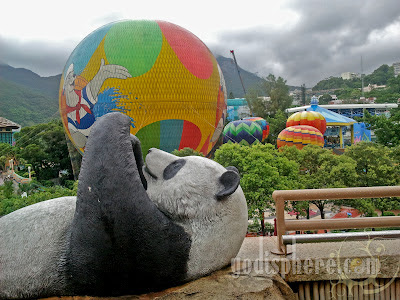Giant Panda in Ocean Park