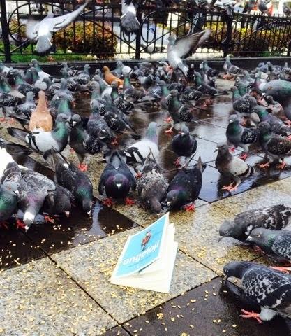 Kuşlar Uçsa... Kitaplar Okunsa...