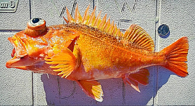 Santa Maria, Orange Rockfish, Wild West Commercial Fishing