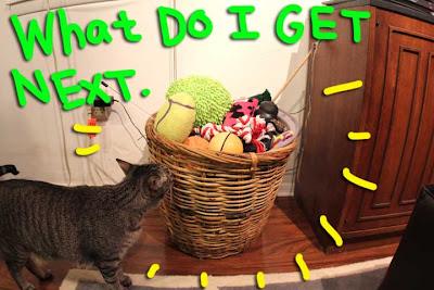 pet toy storage solution 01