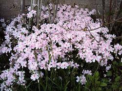 Kevätkukkia