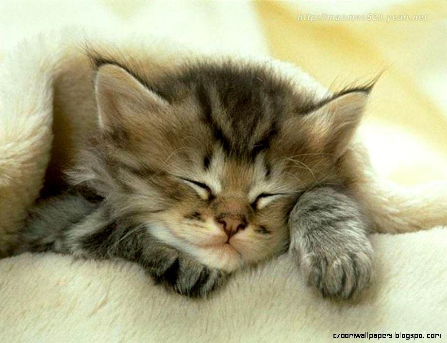 Cute Kitten Wallpaper   Kittens Wallpaper 13938596   Fanpop