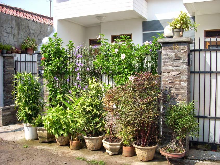 tanaman pagar hias