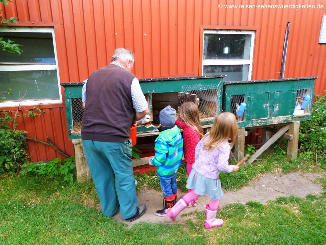 Tiere füttern im Urlaub auf dem Bauernhof mit Bauer