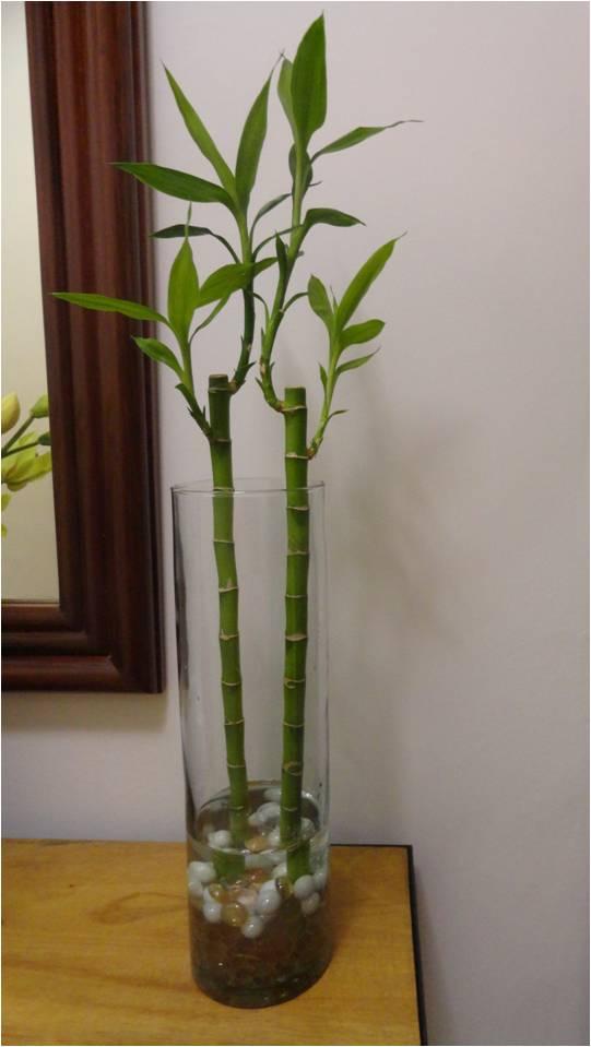 Vida a lo verde living in green c mo arreglar un florero for Bambu seco para decoracion