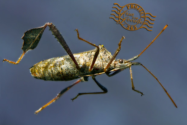 365 photo challenge, Lisa On Location photography, New Braunfels, Texas. Macro insect