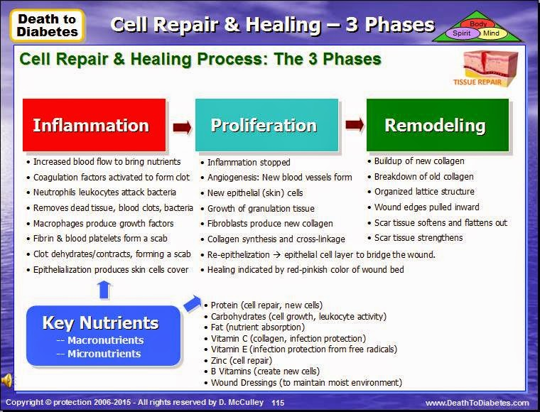 Wound Repair & Healing – 3 Phases