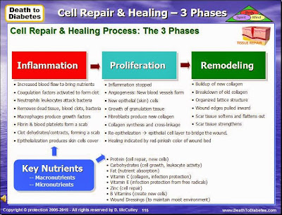 The 3 Phases of Cell Repair & Healing