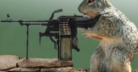 All Wallpapers: Funny Animals With Guns Shooting ...