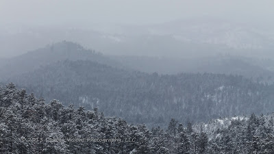 snowfall, custer state park, perfect photo suite 7, adobe lightroom, black hills photography