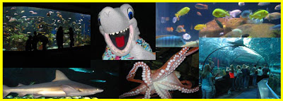Beach Life Blog Christmas At Ripley 39 S Aquarium Myrtle Beach
