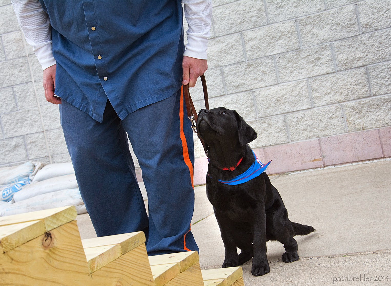A small black lab puppy is sitting on the left side of a man dressed in the blue prison uniform. The man is visible only from the waist down. He is holding the puppy's leash lightly in his left hand at his side. The puppy is gazing upward toward the man, and is wearing the blue Future Leader Dog bandana. The pair are right in front of a set of wooden stairs, a white brick wall is behind them.