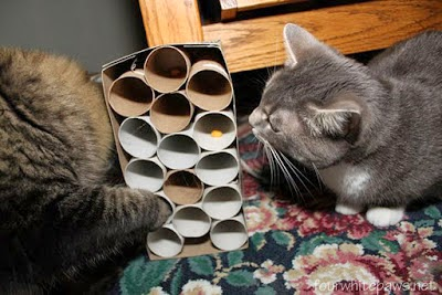 Simple DIY Cat Toys
