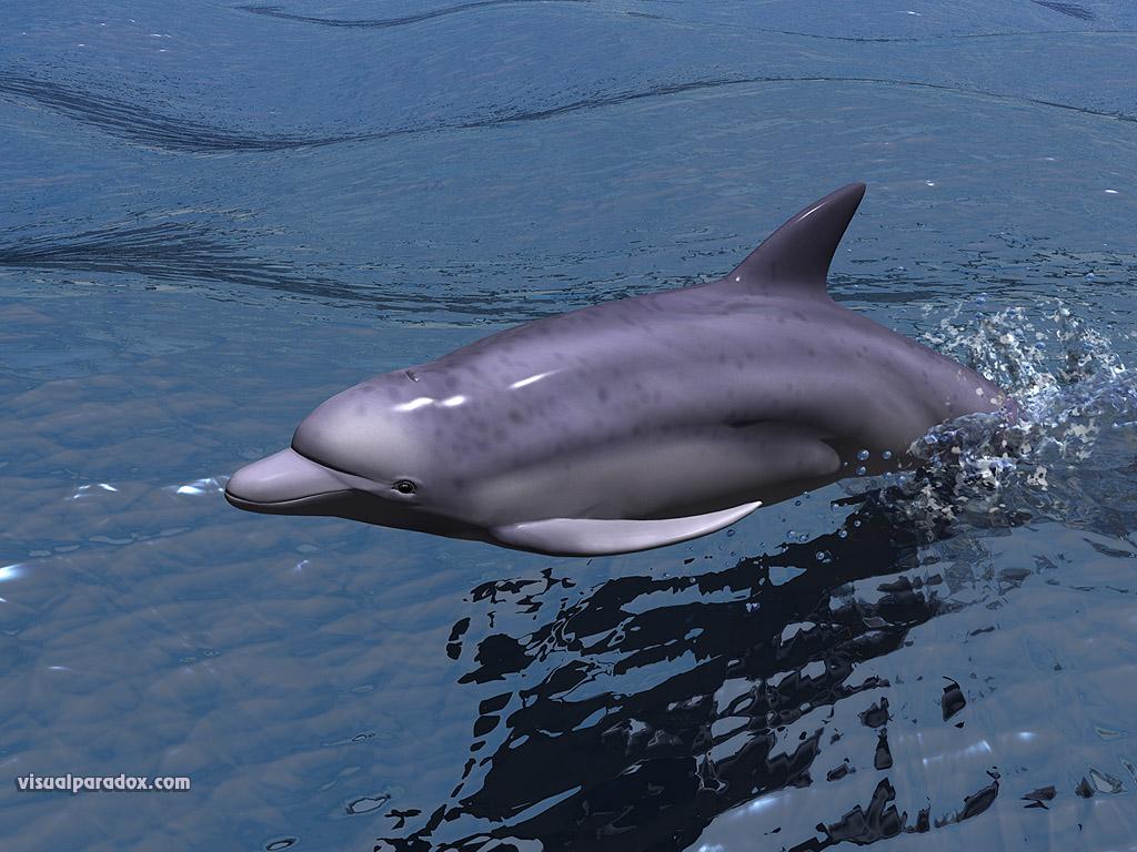 http://3.bp.blogspot.com/-Gkj0TgACNkQ/TWffUnlhcCI/AAAAAAAADpY/hU09i_EJLrk/s1600/3d-dolphin-wallpaper.jpg