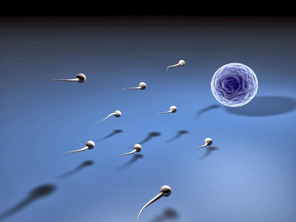 Fakta Tentang Sperma Wanita
