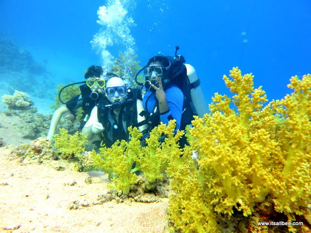 Diving in the Red Sea | Red Sea Egypt | Diving Sharm El Sheikh