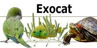 Aves exóticas en Cataluña