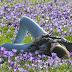 Primavera Acróstico