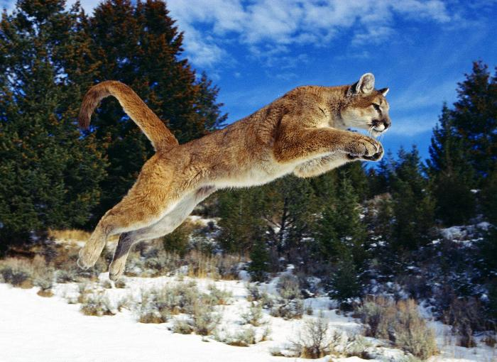 Amazing Animals Jump  Nice Pics Photoshoot images