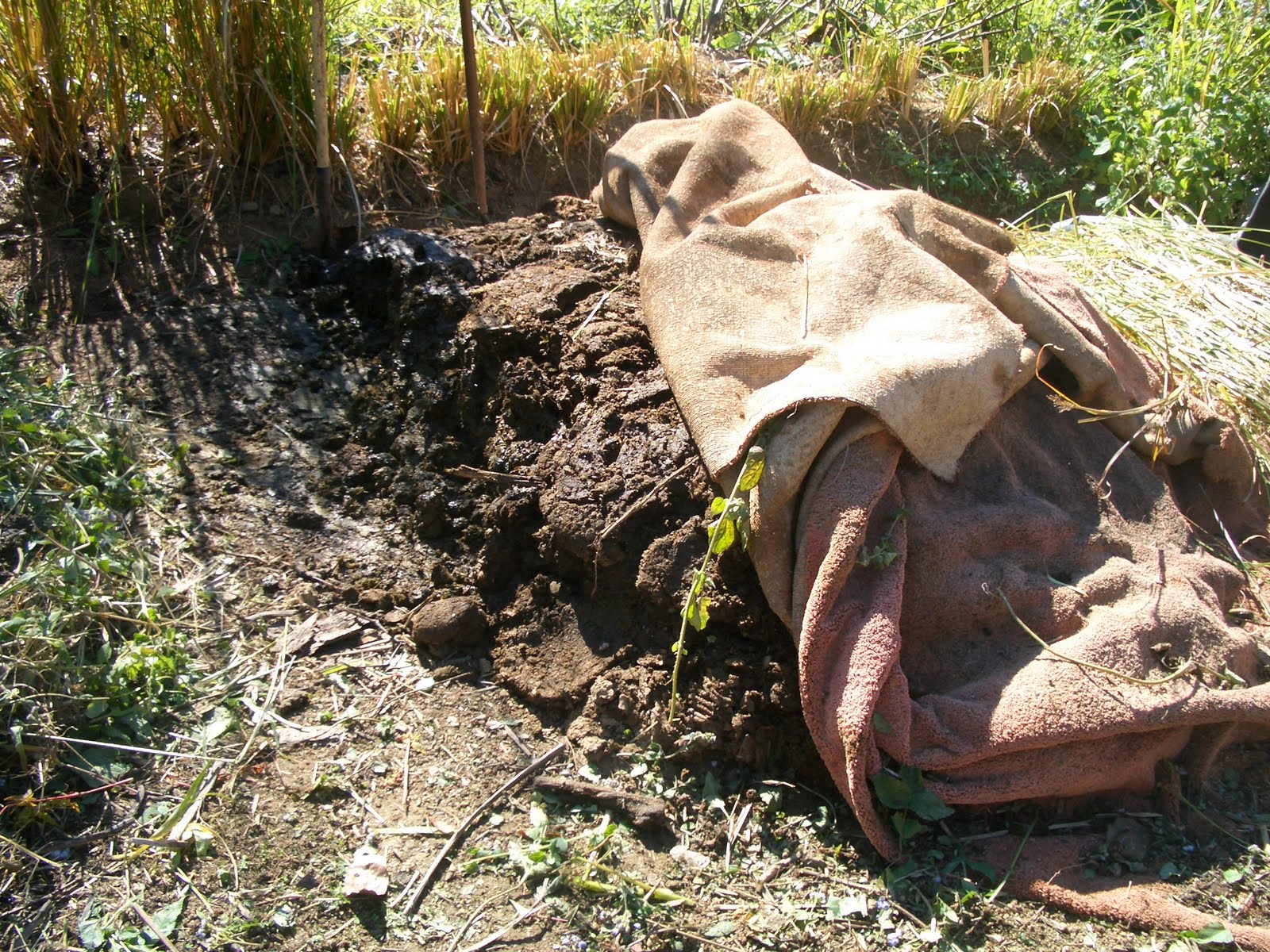 how to use cow manure compost