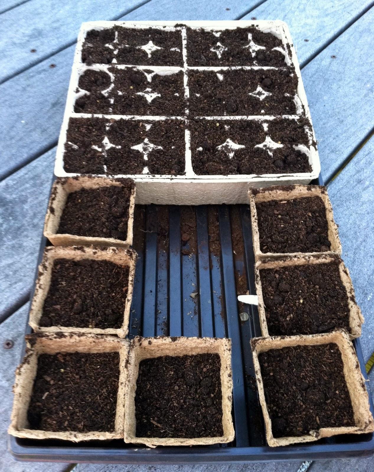 organic seed starting