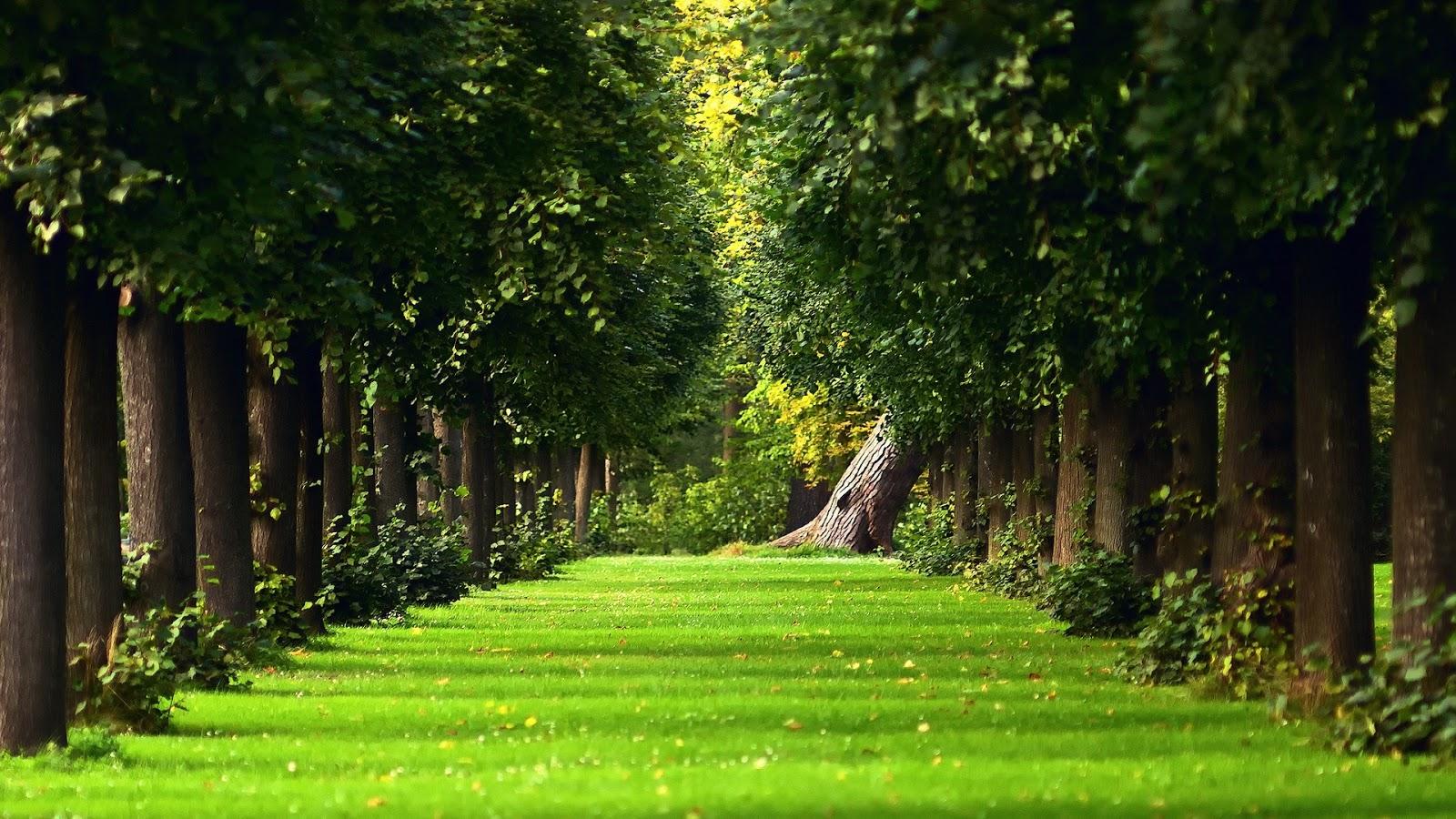 Summer Avenue Trees