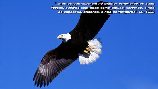 Clique na imagem para Salvar..